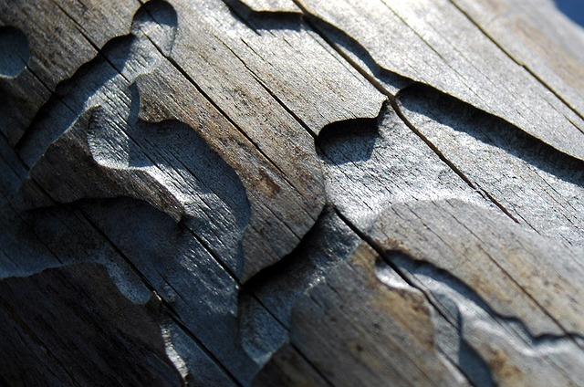 Вот так короед портит древесину